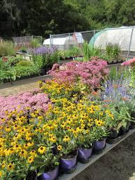 Sunken Gardens Family Membership Fall Plant Sale Rotary Botanical Gardens