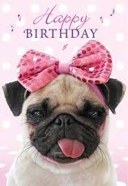 Birthday Pug Meme - pug memes funny happy birthday pug meme collection