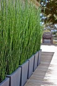 sichtblende balkon bambus als sichtschutz im garten oder auf dem balkon deko und