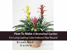 small low light plants 17 best bathroom plants how to use how to choose no light or upright