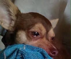 Sad Dog Meme - jdjssjj discovered by hey on we heart it