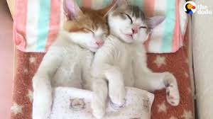Kitten Bed Kittens Sleep Together In Their Own Bed The Dodo Youtube