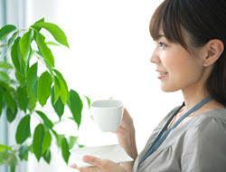 benefits of houseplants 5 benefits of houseplants bayer advanced