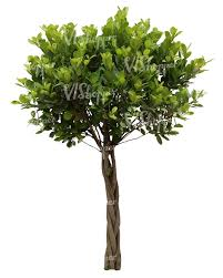 cut out small decorative tropical tree cut out trees and plants