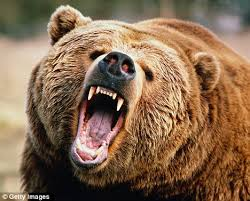 grizzly eat alive man u0027s petrifying story