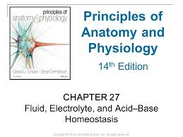 Hole Anatomy And Physiology 13th Edition Principles Of Anatomy And Physiology Ppt Video Online Download