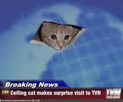 Breaking News Meme - tvn breaking news breaking news ceiling cat makes surprise
