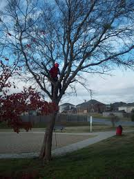 hook and ladder tree service temple tx 76502 yp com