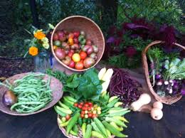 the bountiful harvest at organic vegetable garden master