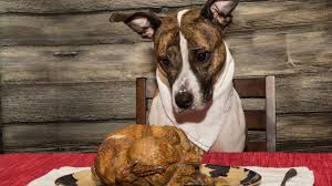 can dogs eat thanksgiving turkey 10 thanksgiving foods your dog shouldn u0027t eat kare11 com