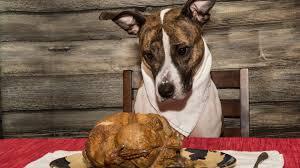 thanksgiving dog 10 thanksgiving foods your dog shouldn u0027t eat kare11 com