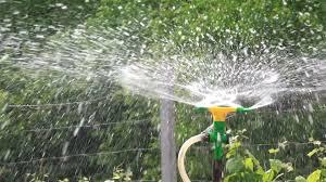 irrigation sprinkler watering vegetable garden irrigating