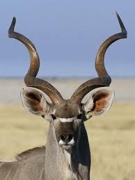 shofar horns 6 shofar shockers you won t believe number 5 the forward