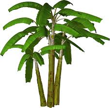 palm tree svg picture of palm tree