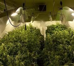Best 25 Marijuana Grow Lights by Humidity Levels For Marijuana Plants Complete Schedule