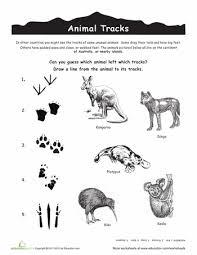 australian animal tracks animal tracks australian animals and track