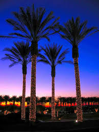palm tree phillipus natural world discover the holiday season in