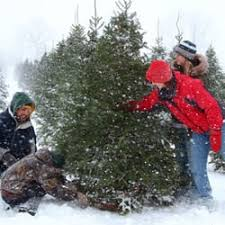 country christmas tree farm and gifts christmas trees 8122