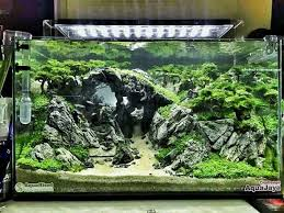 Planted Aquarium Aquascaping 1559 Best Aquarium Images On Pinterest Aquascaping Fish Tanks