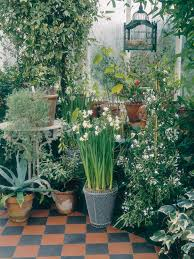 download best outdoor plants for winter solidaria garden