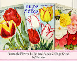 seed catalog covers etsy
