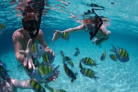 California snorkeling images Best places to snorkel in southern california jpg
