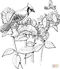 blue jay and sunflowers coloring page free printable coloring pages