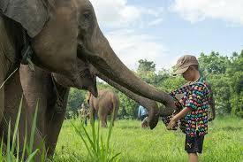 canap駸 anglais chiang mai elephants zipline tixget