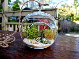how to plant a terrarium solidaria garden