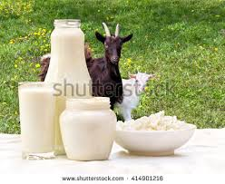 Goat Cottage Cheese by Goat Milk Stock Images Royalty Free Images U0026 Vectors Shutterstock
