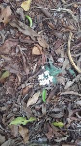 friends of peacehaven botanic park inc new members new plants franke scrub