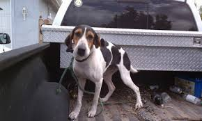 bluetick coonhound name origin redneck and country music dog names pethelpful