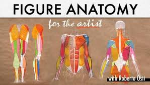 Human Figure Anatomy Learn To Draw A Human Figure In Figure Anatomy For The Artist
