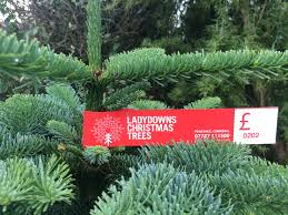 christmas tree prices christmas tree prices penzance ladydowns christmas trees
