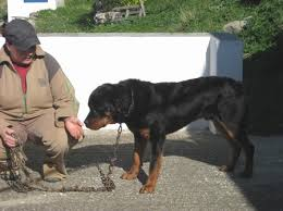 Dog In The Backyard by Paros Animal Welfare Aggressive Chain Dog In The Backyard