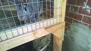 Rabbit Hutch For Multiple Rabbits Building A Sectional Rabbit Hutch 12 Steps With Pictures