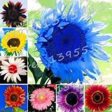 shop new 40pcs bag 24 colors sunflower seeds organic