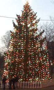 where to buy christmas tree lights boston christmas tree wikipedia