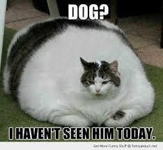 Omg Cat Meme - omg cat challange dog dogs pinterest dog cat and dog pictures