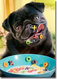 dog alphabet cereal funny pug birthday card greeting card by