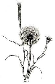 a great website to learn more about forgotten flowers and things
