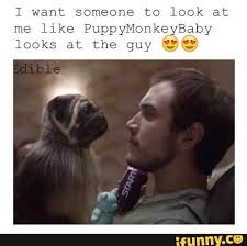 Baby Monkey Meme - 18 best puppy monkey baby images on pinterest cubs mountain dew