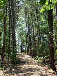 Texas forest images Deep east texas forest retreat vrbo jpg