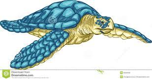 drawn sea turtle color pencil and in color drawn sea turtle color