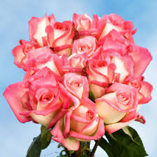 global roses fresh with pink tips roses global