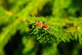 Green Plants Green Plants Beauty In Details 44 Nature Photos U2014 Steemkr