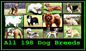 Types Of Dogs All Dog Breeds In The World A To Z Youtube
