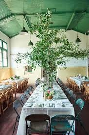 8 best calathea lutea images on pinterest tropical garden