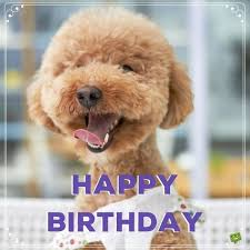 Happy Birthday Meme Dog - unique happy birthday memes with funny cats dogs and cute animals