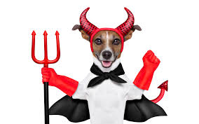 halloween dog background picture animals jack russell terrier dogs trident devil 3840x2400